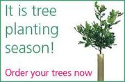 Native Trees For Sale - Nationwide